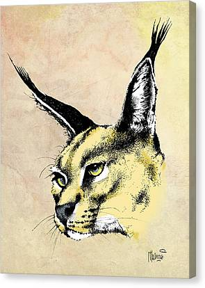 caracal Color Canvas Print by Anthony Mwangi