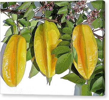 Carambolas Starfruit Three Up Canvas Print by Olivia Novak