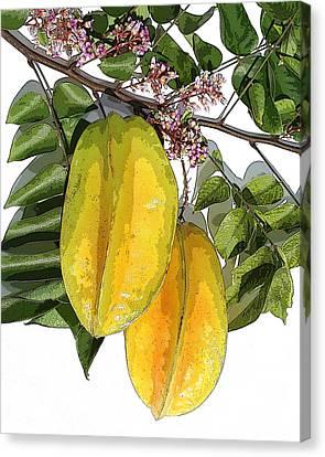 Carambolas Starfruit Two Up Canvas Print by Olivia Novak
