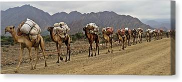 Caravan In The Desert Canvas Print by Liudmila Di
