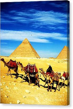 Caravan Of Camels 2 Canvas Print by Alison Tomich