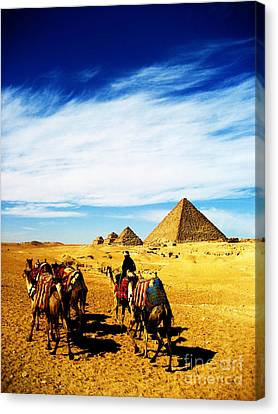 Caravan Of Camels Canvas Print by Alison Tomich