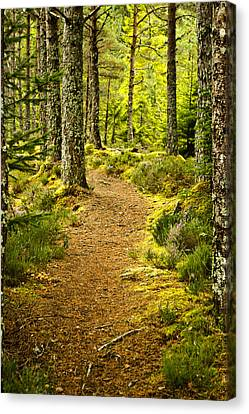 Canvas Print featuring the photograph Carbisdale Path Scotland by Sally Ross