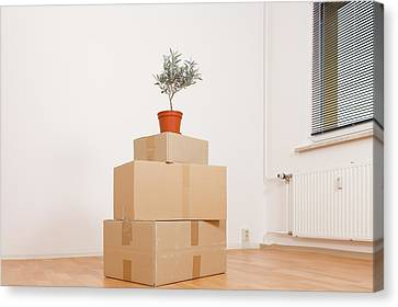 Cardboard Canvas Print - Cardboard Boxes And Pot Plant by Wladimir Bulgar