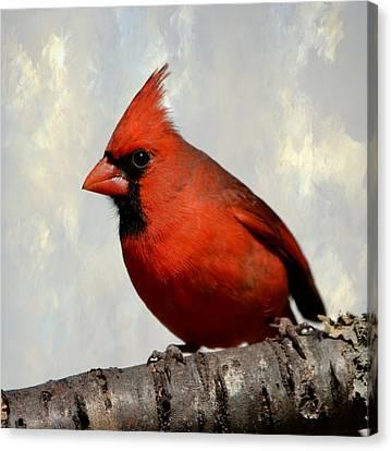 Cardinal 3 Canvas Print