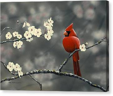 Cardinal And Blossoms Canvas Print by Peter Mathios