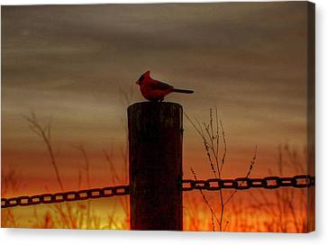 Cardinal At Sunset Canvas Print by Larry Trupp