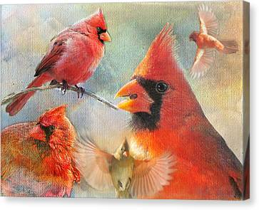 Cardinal Delights Canvas Print by Shannon Story
