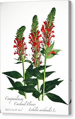 Cardinal-flower Canvas Print