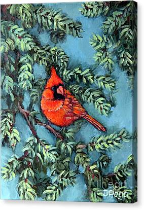 Cardinal In Spruce Canvas Print