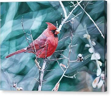 Cardinal In Winter Canvas Print by Joshua Martin