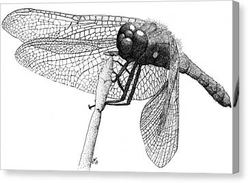 Cardinal Meadowhawk Dragonfly Canvas Print