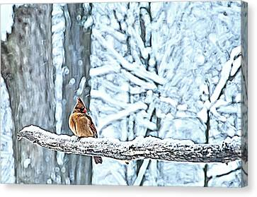 Cardinal No Mate To Keep Warm Canvas Print by Randall Branham