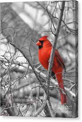 Cardinal Of Hope 002sc Canvas Print by Robert ONeil