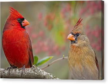 Cardinal Pair Canvas Print