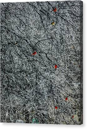 Cardinals In An Ice Storm 001 Canvas Print by Lance Vaughn