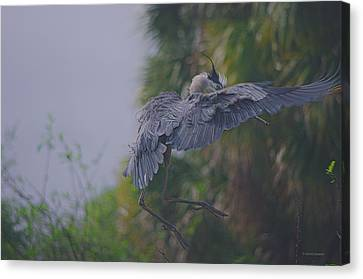 Canvas Print featuring the photograph Careful Landing by Dennis Baswell