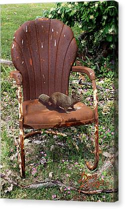 Canvas Print featuring the photograph Careful Where You Sit by Doug Kreuger