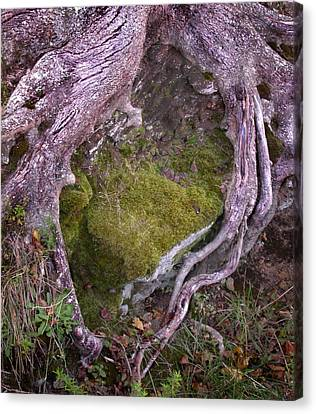 Canvas Print featuring the photograph Caressing The Moss by Gary Slawsky