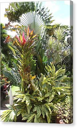 Caribbean Cruise - St Kitts - 1212229 Canvas Print