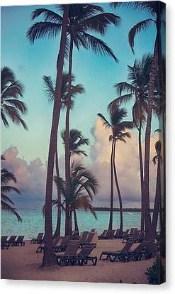 Palm Tree Canvas Print - Caribbean Dreams by Laurie Search