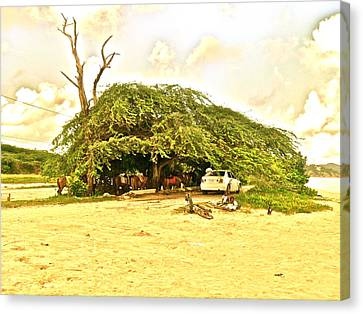 Caribbean Hut Canvas Print by Amanda Just