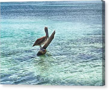 Tropical Bird Postcards Canvas Print - Caribbean Pelican I by Kristina Deane