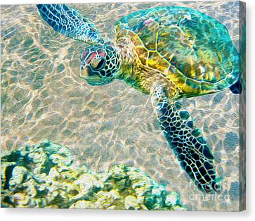 Sea Shell Canvas Print - Beautiful Sea Turtle by Jon Neidert