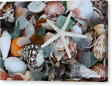 Caribbean Shells Canvas Print