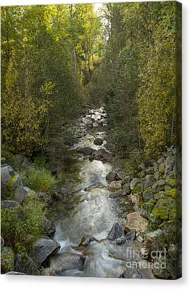 Caribou Creek Canvas Print