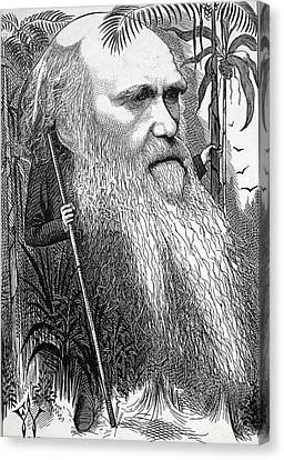 Black And White Human Figure Drawing Canvas Print - Caricature Of Charles Darwin by Paul D Stewart
