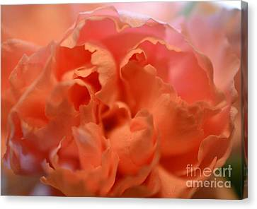 Canvas Print featuring the photograph Carnation Burst by Denise Tomasura
