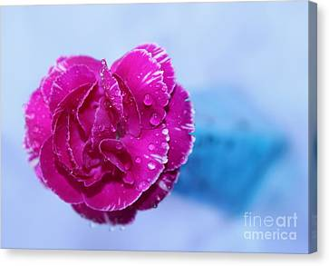 Pink Carnation Canvas Print - Carnation Of Love by Krissy Katsimbras