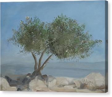 Carob Tree On Mt. Arbel  Canvas Print by Rita Adams