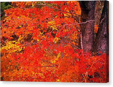 Carolina Autumn Canvas Print by Marion Johnson