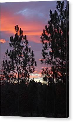 Carolina Sunset Canvas Print by Carolyn Stagger Cokley