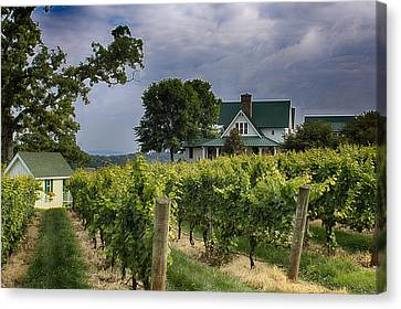 Carolina Vineyard Canvas Print