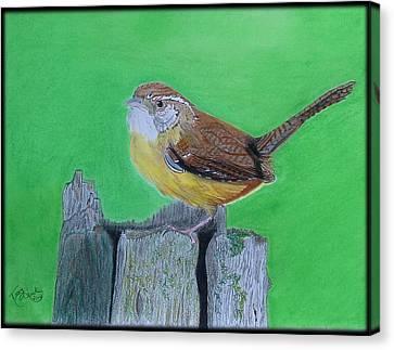 Carolina Wren Canvas Print by Tony Clark