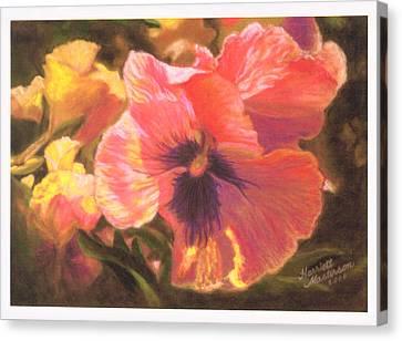Caroline's Pansies Canvas Print by Harriett Masterson
