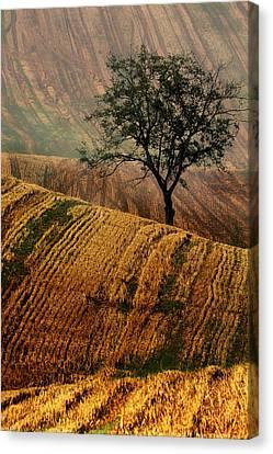 Carpet Fields Of Moravia Canvas Print by Jaroslaw Blaminsky