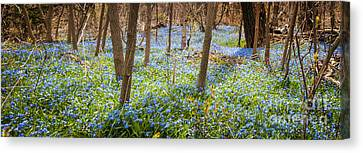Forest Floor Canvas Print - Carpet Of Blue Flowers In Spring Forest by Elena Elisseeva