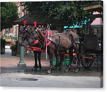 Carriage Horses At City Market Canvas Print by Linda Ryan