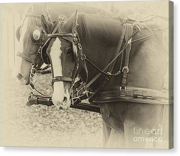 Carriage Horses II Canvas Print