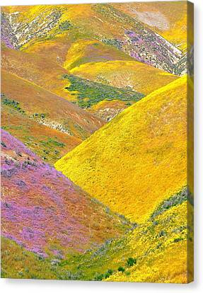Carrizo Wildflowers Vertical Canvas Print by Marc Crumpler