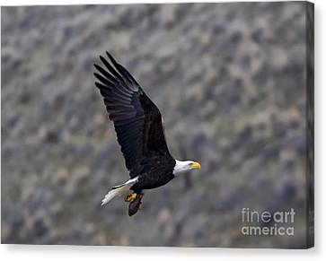 Carrying A Meal Canvas Print