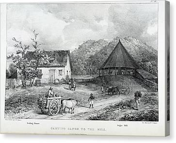 Carting Canes To The Mill Canvas Print by British Library