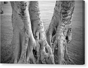Carved Roots Canvas Print by Chris Ann Wiggins