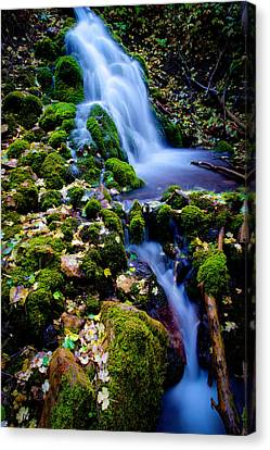 Cascade Creek Canvas Print by Chad Dutson