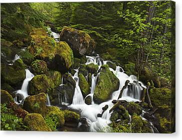 Cascades In The Woods Canvas Print by Andrew Soundarajan