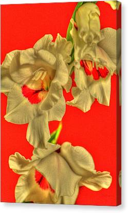 Cascading Gladiolas Canvas Print by Deborah  Crew-Johnson